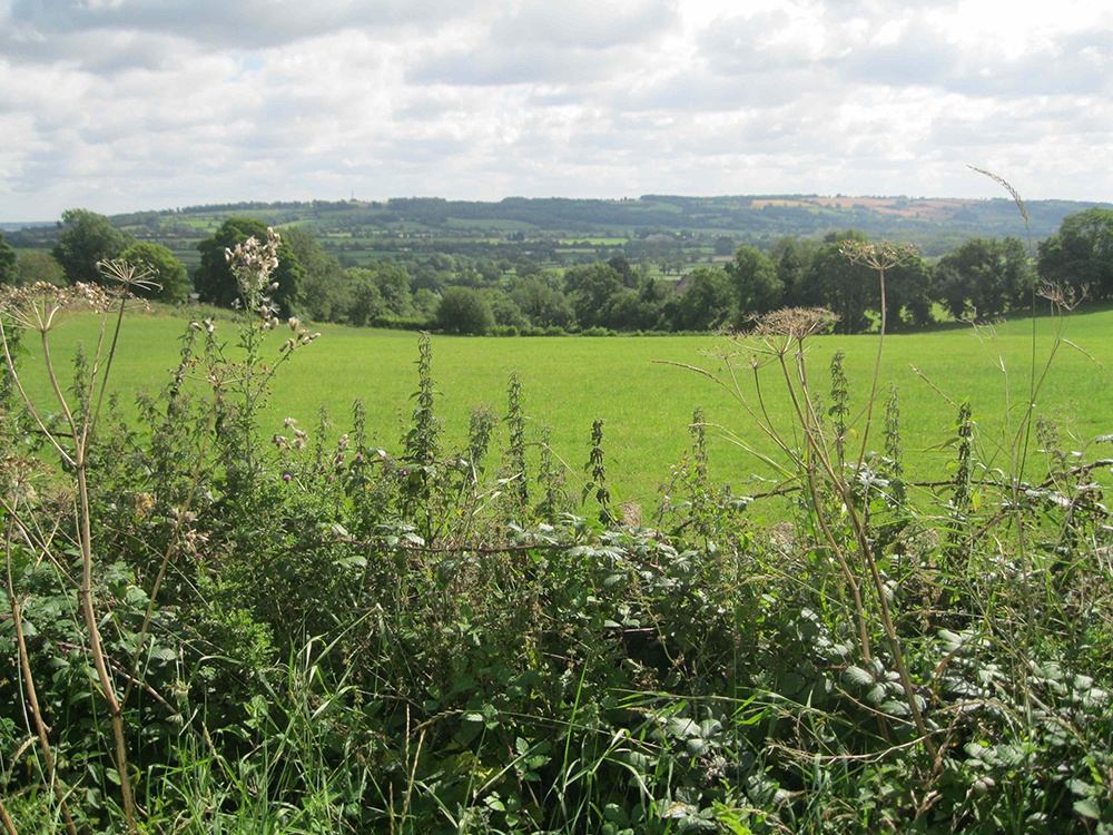 Hedgerow and Cotswold countryside
